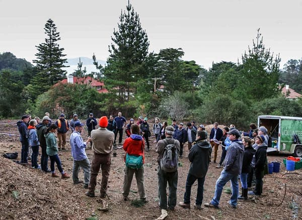 Tree Planting Volunteers